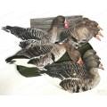 Чучела гусей, флюгера гусей, профили гусей